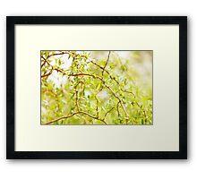 Willow Salix Alba tree detail Framed Print