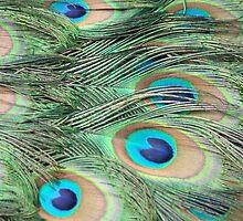 Peacock beauty by hana169