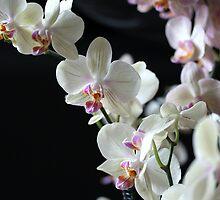 Gorgeous Bouquet by sstarlightss