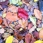 autumn paint by plamenx