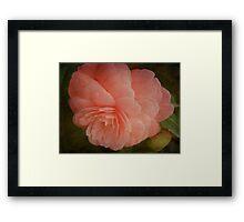 Faded Flower Framed Print