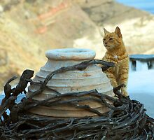 cat on the roof by plamenx