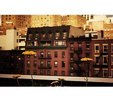 High Line Park Wild Flowers Photographic Print