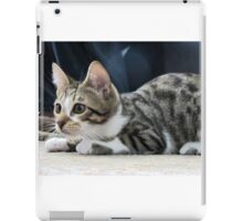 This is our cat Monty.  iPad Case/Skin