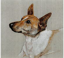 Rocky the rescue dog in crayon Photographic Print