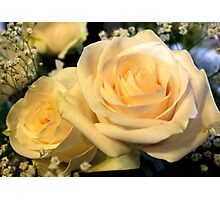 Two white roses Photographic Print