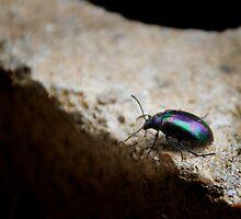 Christmas Beetles by Meagan Bush