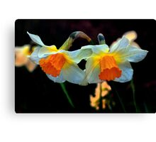 Daffodils Out Of The Dark Canvas Print