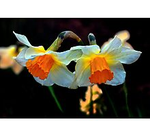 Daffodils Out Of The Dark Photographic Print