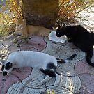 Street cats by impossiblesong