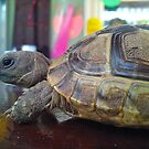 Bar tortoise by impossiblesong
