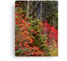 MOUNTAIN ASH,AUTUMN Canvas Print