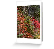 MOUNTAIN ASH,AUTUMN Greeting Card