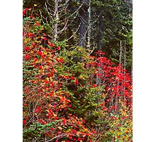 MOUNTAIN ASH,AUTUMN Photographic Print