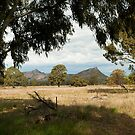 North Grampians by Andrew Cowell