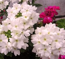Little White flowers by kazeproductions
