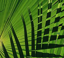 Palm and Shadow, Puerto Rico by Gregory L. Nance