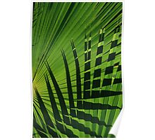 Palm and Shadow, Puerto Rico Poster