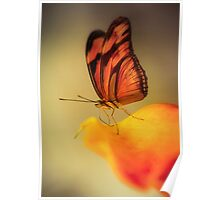 Orange butterfly on yellow and red flower Poster