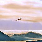 Arctic Glacier by Steve