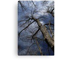 Stately Tree 2 Canvas Print