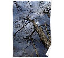Stately Tree 2 Poster