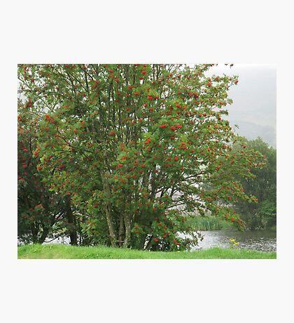 Cwmcelyn Pond Photographic Print