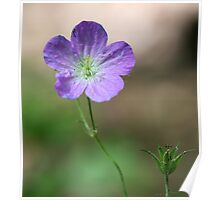 Purple Wildflower 2 Poster