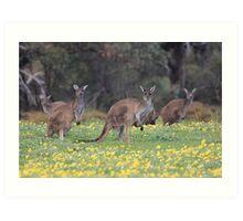 kangaroos on yellow flowers Art Print