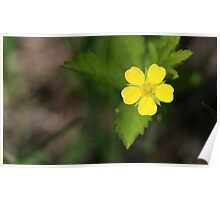 Yellow Wildflower Poster