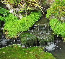 Little stream in Ireland by kazeproductions