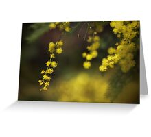 Spring Wattle Greeting Card
