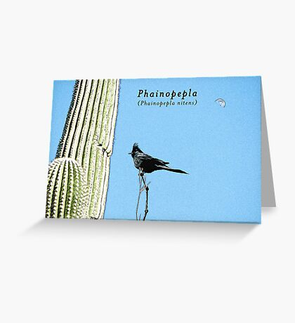 Phainopepla Greeting Card