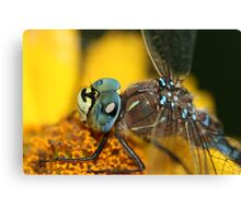 Dragonfly Macro  Canvas Print