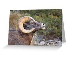 Bighorn Ram 2 Greeting Card