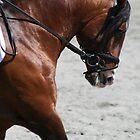 Ali-Baba ~ Lusitano Stallion by PrairieRose