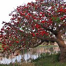 Coral Tree by Gloria Abbey