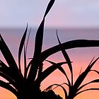 Pandanus Sunset by Jenny Dean