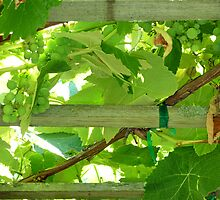Grape Arbor by 2HivelysArt