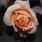 Just peachy by Odille Esmonde-Morgan
