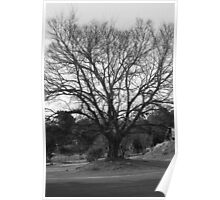 A Leafless Tree Poster