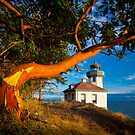 Madrone & Lighthouse by Inge Johnsson