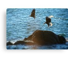Pair of Eagles #1 Canvas Print