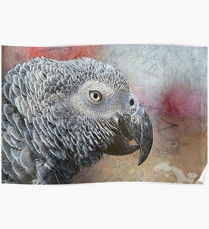 Parrot Portrait Texture Poster