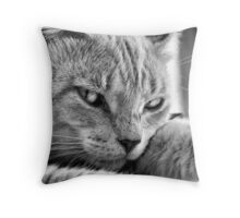 Feline Eyes Throw Pillow