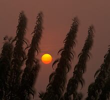Sun in the mist by THHoang