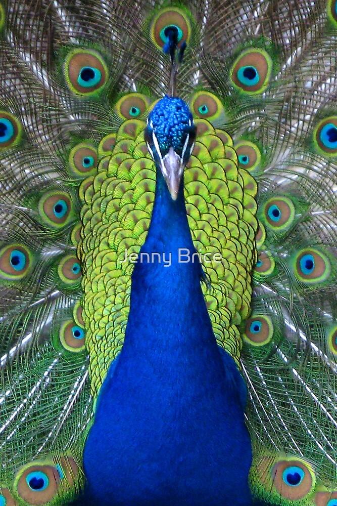 Peacock Portrait by Jenny Brice