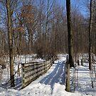 Hiking Trail Bridge with Shadows 3 by marybedy