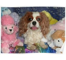Cavalier With Cuddly Toys Poster