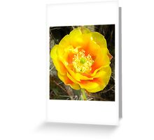 Colored By The Sun - Prickly Pear Cactus Flower Greeting Card